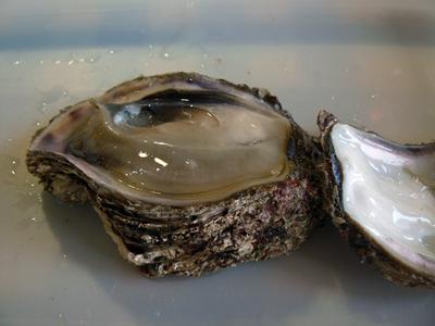 岩牡蠣3.jpg